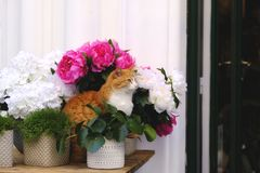 Cute cat in flowers. Quite unique photo of a cute red cat. Cat sits somewhere at the street straight inside flowers. It looks really confident and happy. Natural royalty free stock image