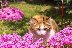 Cute cat in the flowers Stock Image