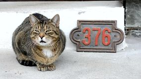 Cute cat in front of the house stock video footage