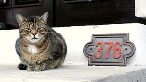 Cute cat in front of the house stock footage