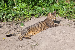 Cute cat in the garden Royalty Free Stock Image
