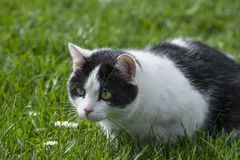 Cute cat in grass Royalty Free Stock Image