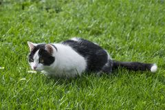 Cute cat in grass Royalty Free Stock Photography