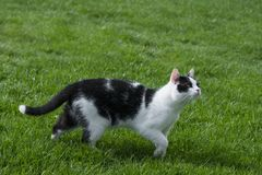 Cute cat in grass Stock Photography