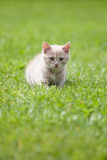 Cute cat on the grass Royalty Free Stock Photography