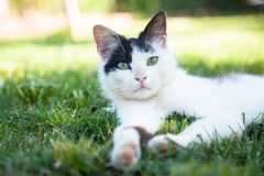 Cute cat on the grass Royalty Free Stock Photo