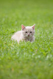 Cute cat on the grass Royalty Free Stock Photos