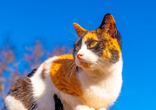 Cute Cat in Greece Royalty Free Stock Photos