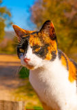 Cute Cat in Greece Stock Image