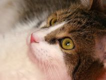 Cute cat with green eyes Stock Photography