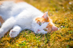 Cute cat with green eyes in the garden Royalty Free Stock Photos