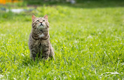 Cute cat on the green lawn Stock Images