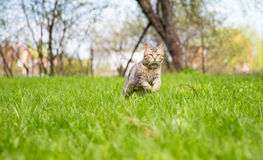 Cute cat on the green lawn Stock Photo