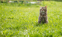 Cute cat on the green lawn Royalty Free Stock Photography