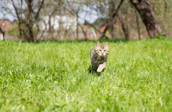 Cute cat on the green lawn Royalty Free Stock Images