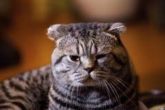 Cute cat Stock Images
