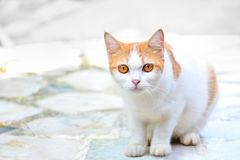 The cute cat have yellow eyes sits there looking at something suspiciously on the marble floor Stock Photo