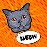 Cute cat head pop art.  on orange background. Vector Stock Photography