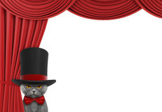 Cute cat hiding behind the curtain Royalty Free Stock Photo
