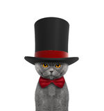 Cute cat in a high hat cylinder and necktie. Isolated on white stock photo
