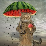 Cat with umbrella 1. The cute cat is holding an umbrella in one paw and fruit ice cream in other stock photo