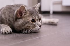 Cute cat at home stock photos