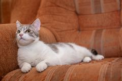 Cute cat at home. Funny cat. Cute funny cat at home royalty free stock image