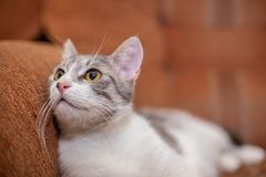 Cute cat at home. Funny cat. Cute funny cat at home stock photography
