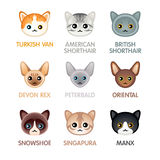 Cute cat icons, set III Royalty Free Stock Photos