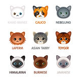 Cute cat icons set  Royalty Free Stock Photos