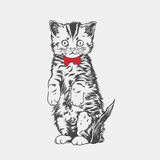 Cute Cat art. This illustration can use as commercial Stock Images