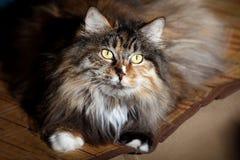 Cute cat indoor stock photos
