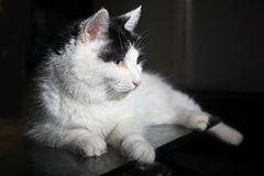 Cute cat indoors royalty free stock photography