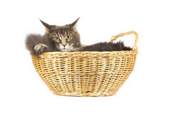 Cute cat isolated over white background Royalty Free Stock Images