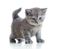 Cute cat kitty  on white Stock Photography