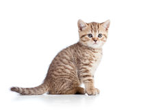 Cute cat kitty on white background Stock Photography