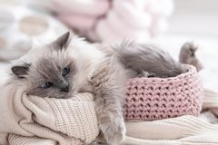 Cute cat with knitted blanket in basket at home. Warm and cozy winter stock images