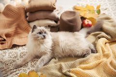 Cute cat with knitted blanket on floor at home. Warm and cozy winter stock image