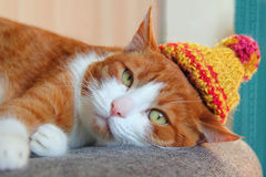 Cute cat in a knitted hat. With pompon resting on a chair stock images