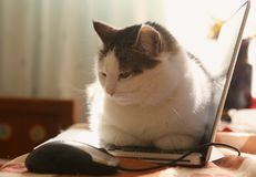 Cute cat lay resting on laptop keyboard on the table Royalty Free Stock Photo