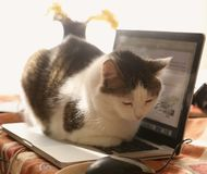 Cute cat lay resting on laptop keyboard on the table stock images