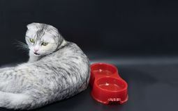 Cute cat laying on black background with bowls for food. stock photo