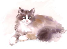 Cute Cat Laying Down Watercolor Pet Portrait Illustration Hand Painted. Watercolor illustration of and Cat Laying Down Stock Photos