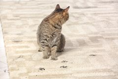 Cute cat leaving muddy paw prints. On carpet Royalty Free Stock Photos