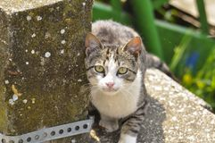 Cute cat lie down on the concrete. Lazy cat sit on concrete. Portrait of cat on the ground. Kitty looking something fur domestic pet lying animal mammal pretty royalty free stock photography