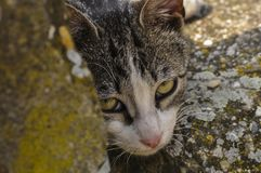 Cute cat lie down on the concrete. Lazy cat sit on concrete. Portrait of cat on the ground. Kitty looking something fur domestic pet lying animal mammal pretty stock photography