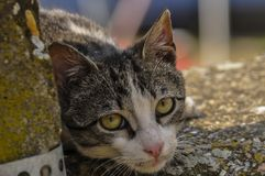 Cute cat lie down on the concrete. Lazy cat sit on concrete. Portrait of cat on the ground. Kitty looking something fur domestic pet lying animal mammal pretty royalty free stock image