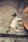Cute cat lies on concrete floor. White black ginger red color cat. Stock Photo