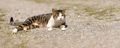 Cute cat lies relaxed on a path and watching stock images