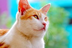 Cute cat look like thinking about something Stock Images